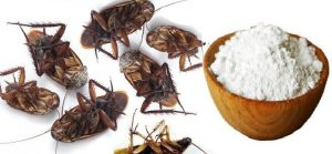 I-Put-This-In-The-Corners-Of-My-House-And-The-Next-Day-All-The-Cockroaches-Were-Dead